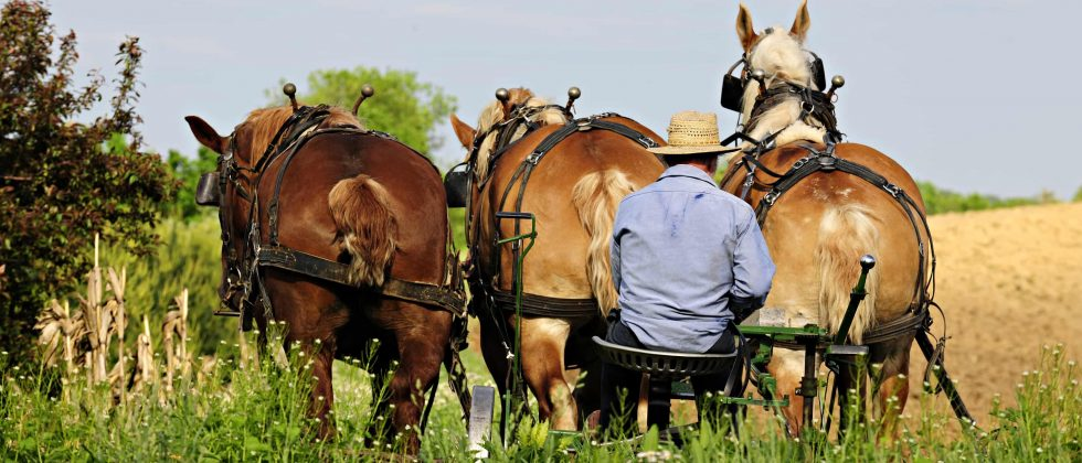 Amish farmer tilling his field with horses in Berlin