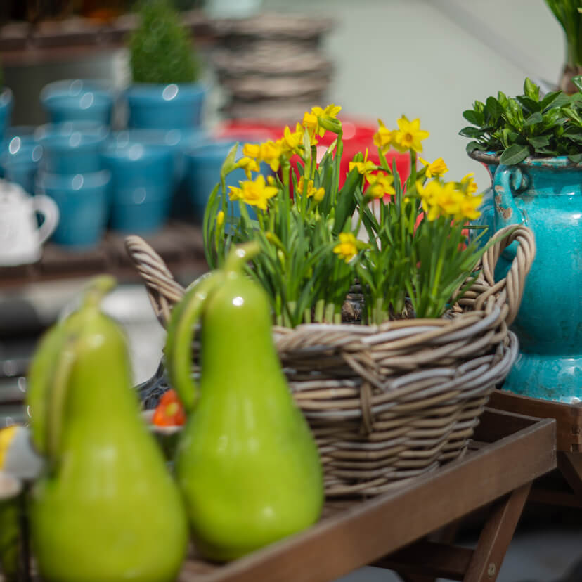 garden center with daffodils and home goods in Berlin, OH
